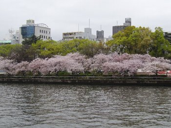 天満の桜.JPG
