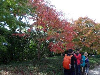 左岸の紅葉.JPG